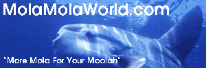 Ad: MolaMolaWorld.com: More Mola For Your Moolah